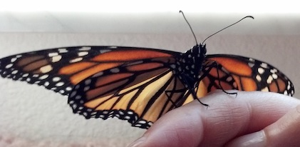 Laura Scott holding Monarch butterfly, Healer, Channel, Mystic and Soul Specialist