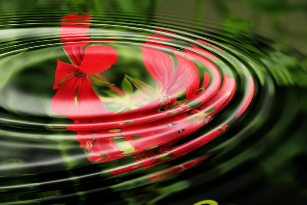 Ancient Stardust Readings Geranium in Water Laura Scott Guides you