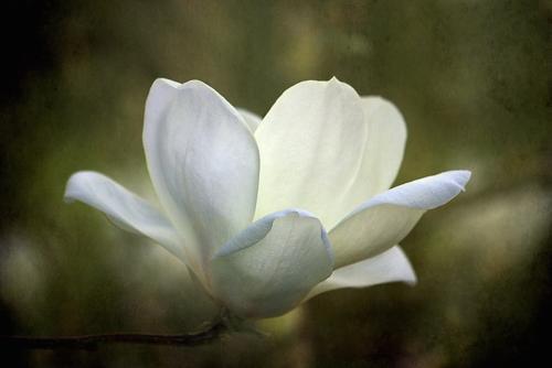 Ancient Stardust Readings Magnolia Laura Scott Guides you